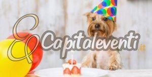 Come Festeggiare Il Compleanno Del Cane