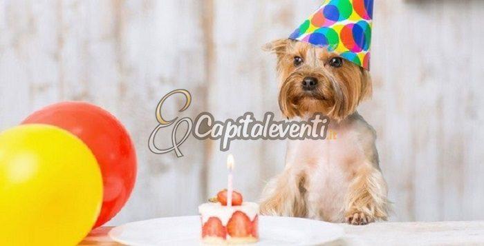 Come Festeggiare Il Compleanno Del Cane Feste Di Compleanno Roma